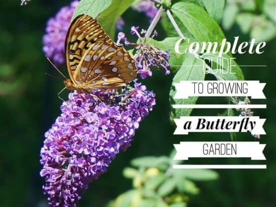 The Complete Guide To Growing A Butterfly Garden