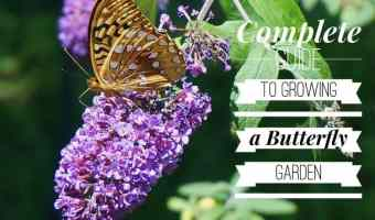 Planting a Butterfly Garden: The Ultimate Guide