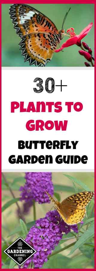 plant list for butterfly garden
