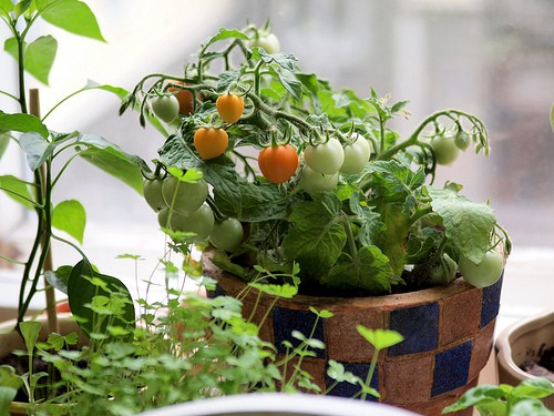 Lovely Gardening Channel