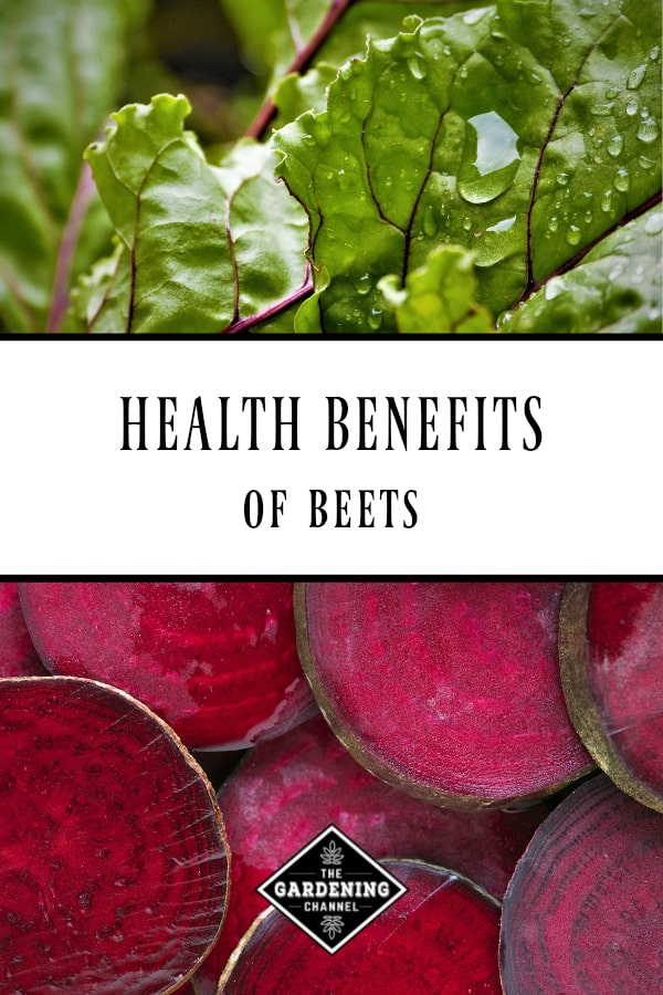 beet leaves and beet root with text overlay health benefits of beets