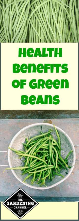 green beans health benefits