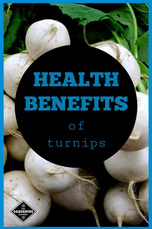white turnips and turnip greens with text overlay health benefits of turnips