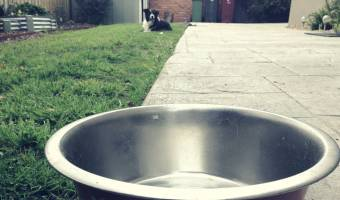 Tips for Cleaning Dog Poop Out of Your Yard