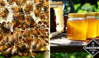Help Prevent Allergies with Local Honey