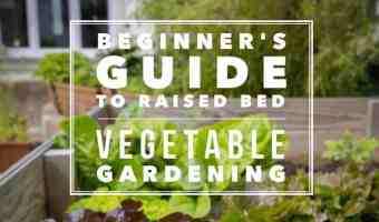 ultimate beginner raised bed vegetable gardening guide