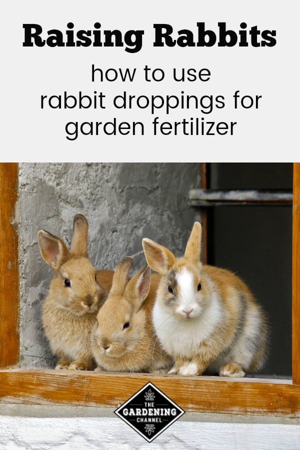 three farm rabbits with text overlay raising rabbits how to use rabbit droppings for garden fertilizer