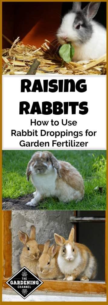 using rabbit droppings for garden fertilizer