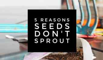5 Reasons Seeds Do Not Sprout in Garden