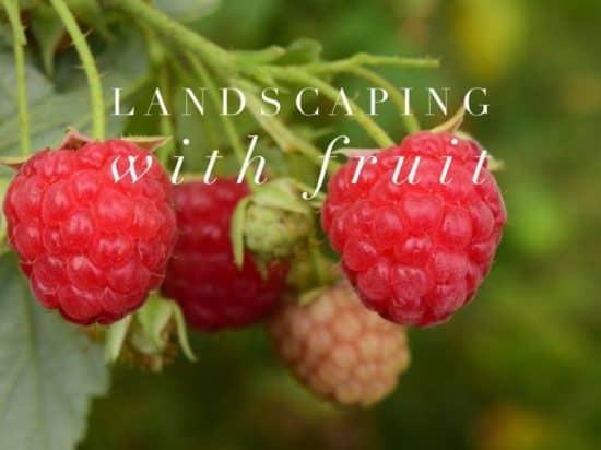 Using Fruit Bushes to Landscape