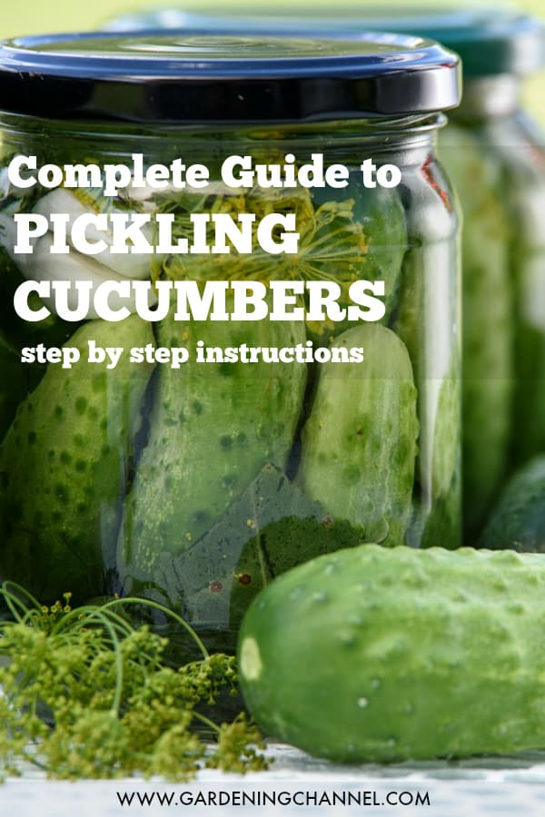 homemade pickled cucumbers with text overlay complete guide to pickling cucumbers step by step instructions