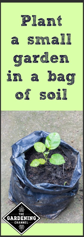 Plant a Small Garden In a Bag of Soil - Gardening Channel