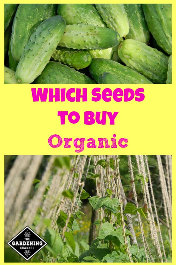 organic cucumbers and organic beans growing on trellis with text overlay which seeds to buy organic