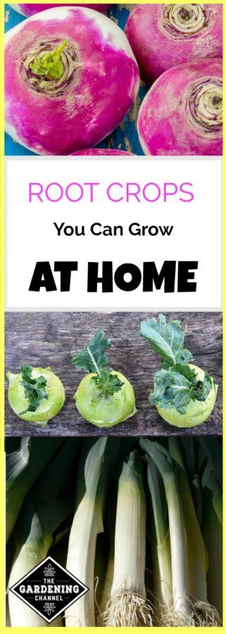 growing root crops in the home garden