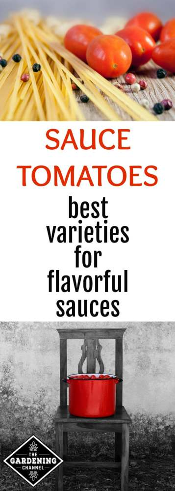 tomato sauce and sauce tomatoes with text overlay sauce tomatoes best varieties for flavorful sauces