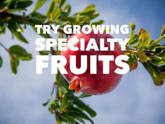 Ideas for Growing Specialty Fruits