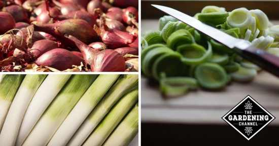 Growing Onion Alternatives in the Garden