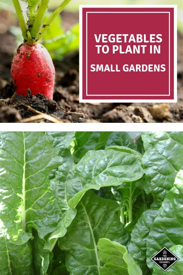 radish and spinach with text overlay vegetables to plant in small gardens