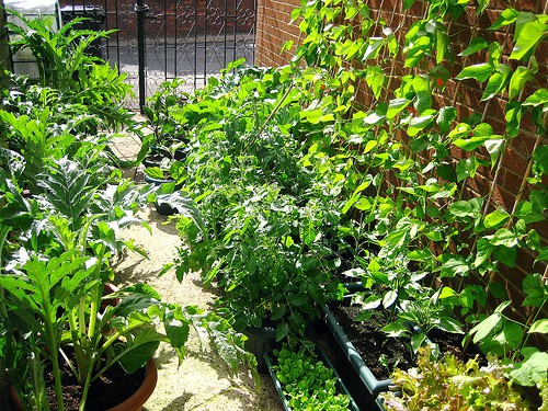 Vegetables for the Small Garden