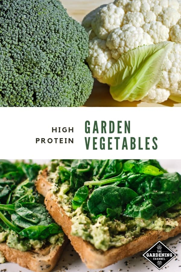 broccoli cauliflower on cutting board spinach avocado on toast with text overlay high protein garden vegetables