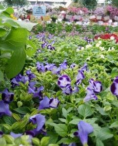 Revitalizing cheap plants