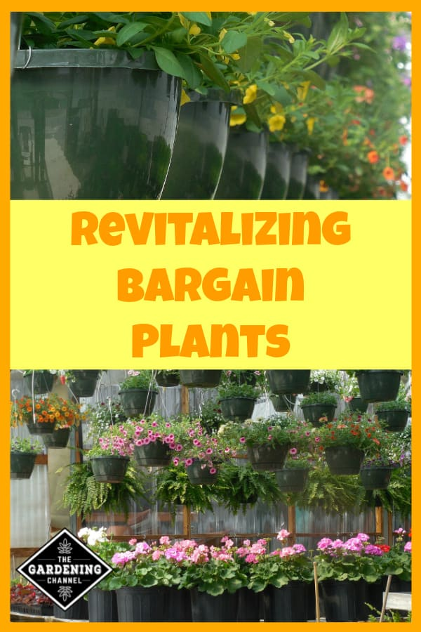 nursery gardeing store with plants for sale with text overlay revitalizing bargain plants