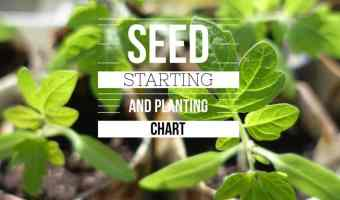 Beginning Gardener's Vegetable Seed Starting and Planting Chart