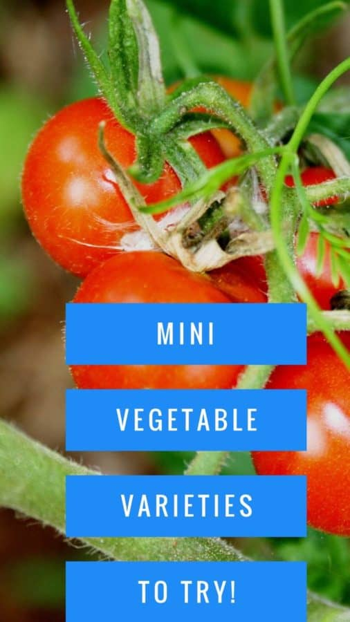 mini vegetable varieties for small gardens