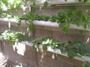 No-soil gardening
