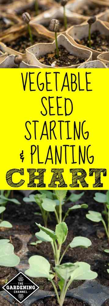vegetable seed starting and planting chart