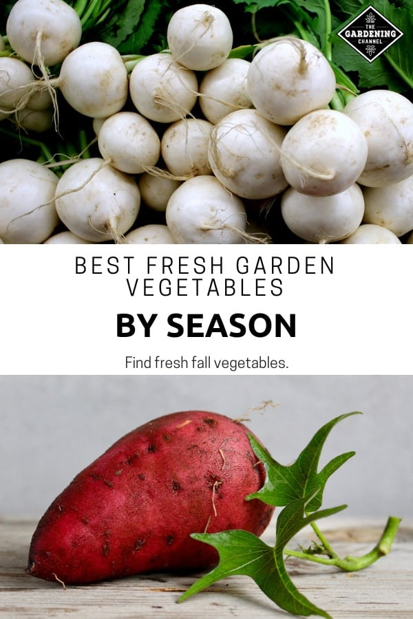 turnips sweet potato with text overlay best fresh garden vegetables by season find fresh fall vegetables