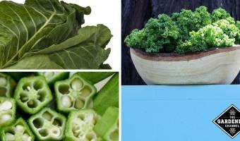 List of Calcium Rich Foods