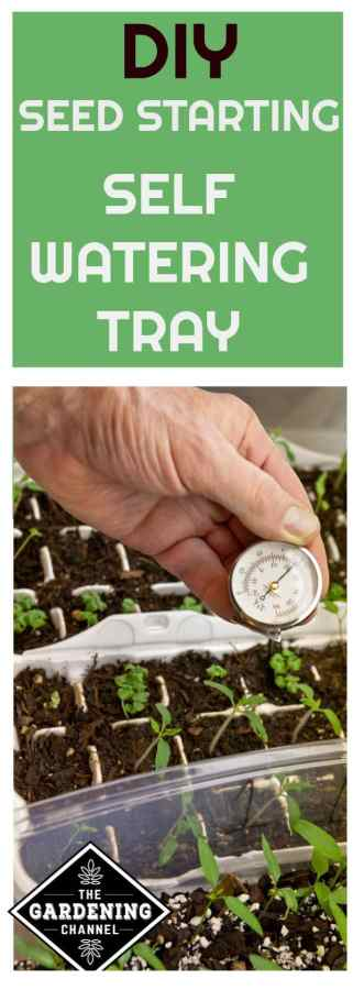 seed starter with self watering tray