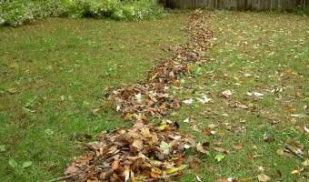 Autumn Lawncare