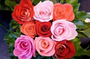 7 Great Flower Shops Near Denver Co Gardening Channel