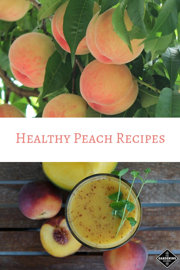 peaches growing peach smoothie with text overlay healthy peach recipes