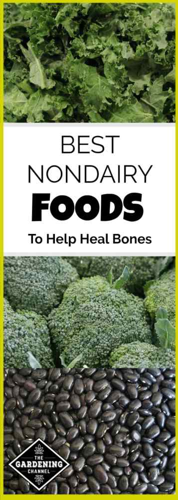 nondairy food options to heal bones