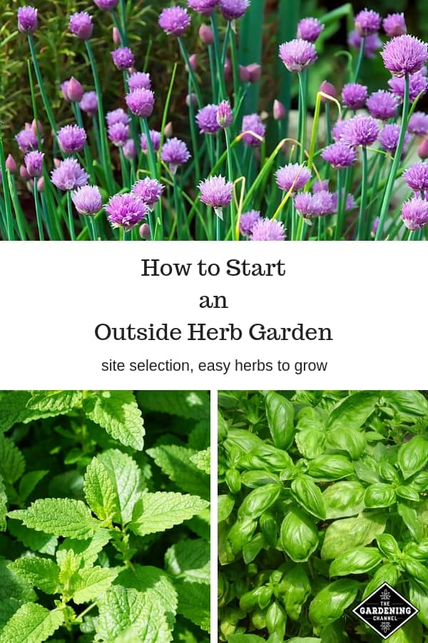 chives, mint and basil growing outdoors with text overlay how to start an outside herb garden site selection easy herbs to grow