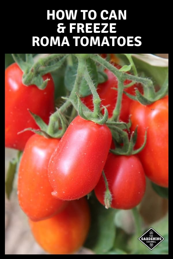 roma tomatoes in garden with text overlay preserving roma tomatoes