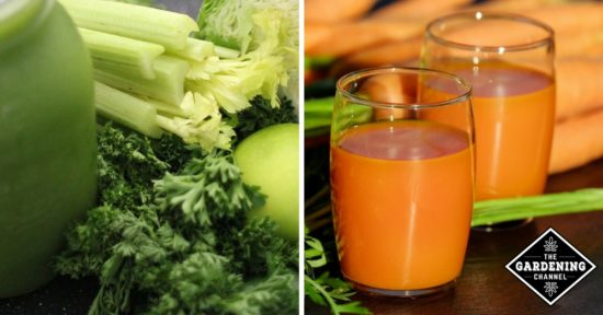 Juicing for Health Benefits