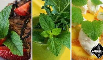 Cooking with Mint Recipes