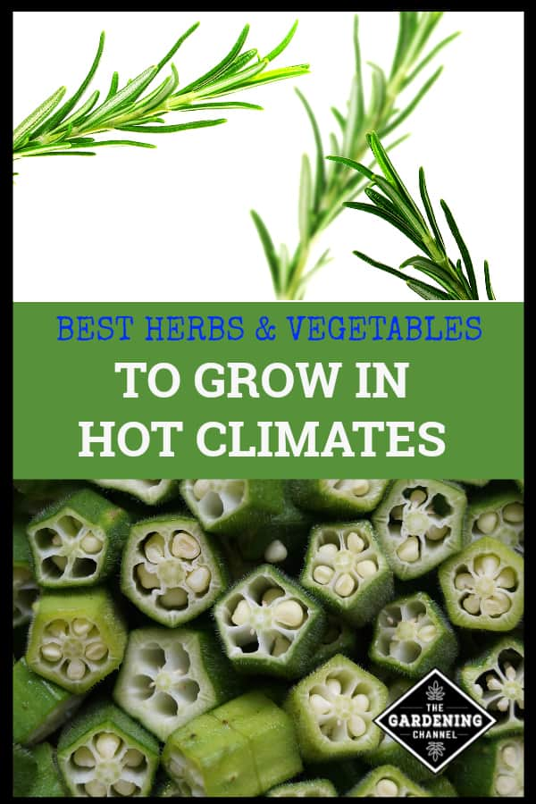 rosemary and okra with text overlay best herbs and vegetables to grow in hot climates