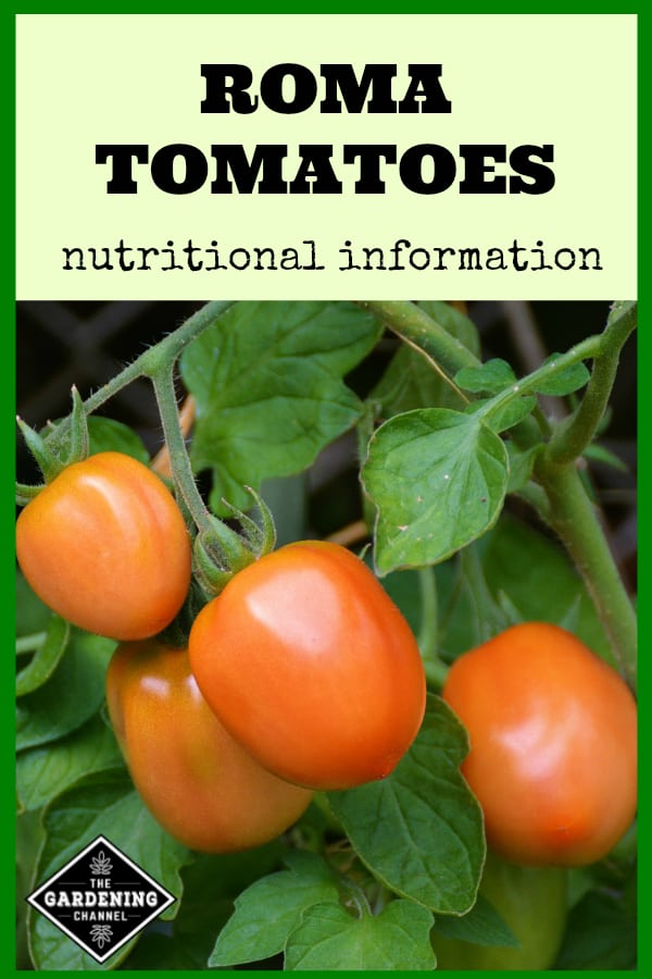 roma tomatoes in the garden with text overlay roma tomatoes nutritional information