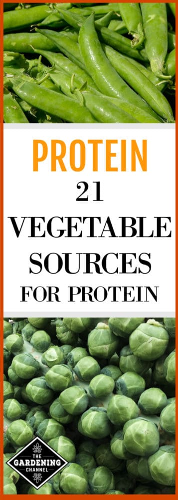 Which Vegetables Contain Protein List of vegetables with protein gardening channel garden harvested peas and harvested brussels sprouts with text overlay protein twenty one vegetable sources for workwithnaturefo