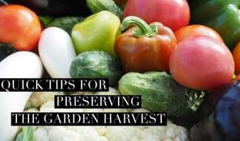 Preserve Garden Harvest with These Quick Tips