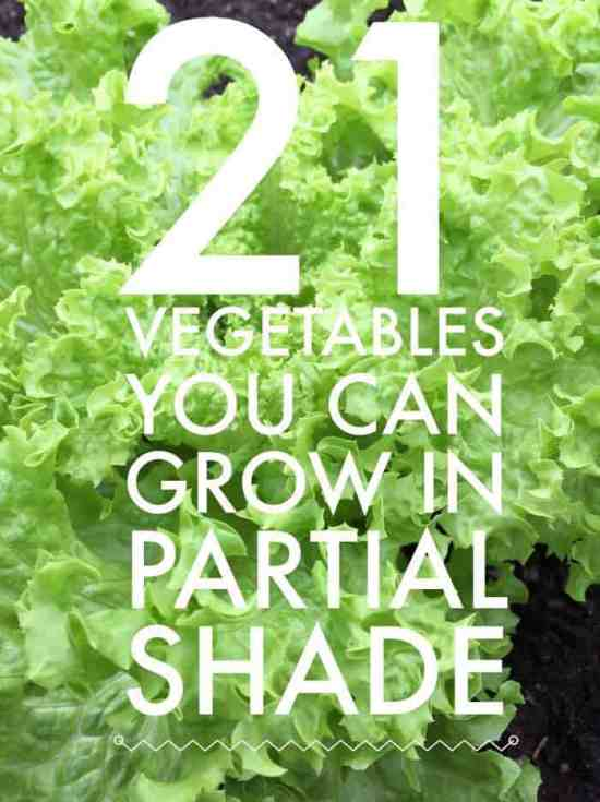 pinterest pin partial shade vegetables list
