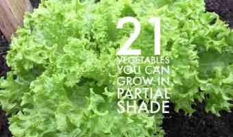 grow these vegetables garden partial shade