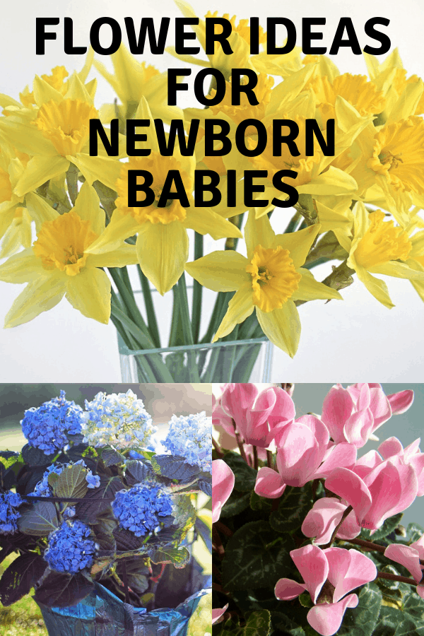 daffodils hydrangeas pink potted plant with text overlay flower ideas for newborn babies