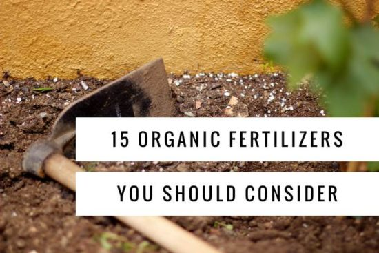 15 organic fertilizers you should try