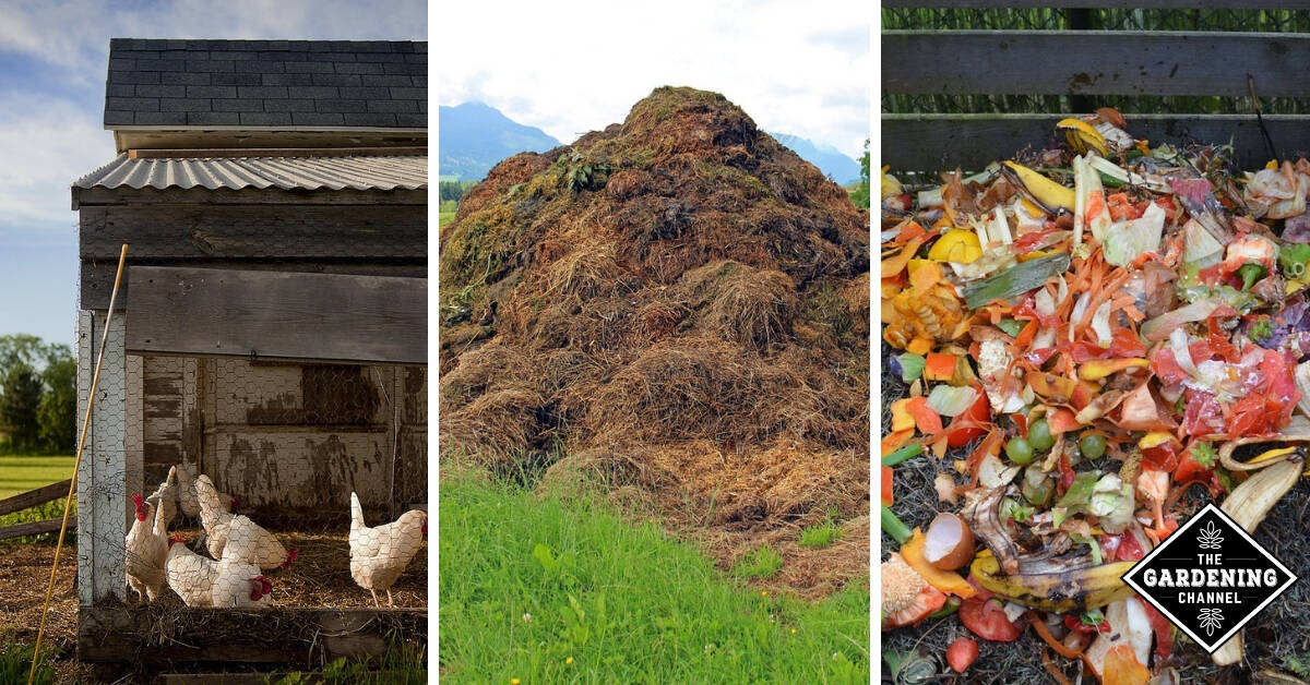 List of the Best 15 Common Organic Fertilizers - Gardening